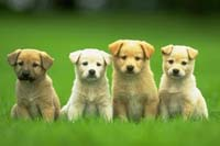 Puppy Training Classes 2507 Ashbury Road Columbus OH 43231 (614) 452-4456