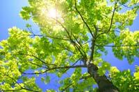 Arborists 110 Midlothian Rd Hawthorn Woods IL 60047 (847) 239-5358
